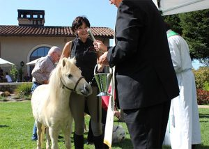 Blessing of the Animals at St. Francis Winery