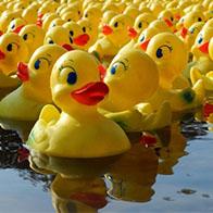 Duck Dash Healdsburg
