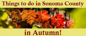 Things to do in Sonoma County in Autumn