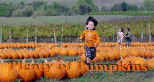Tolay Fall Festival Sonoma County