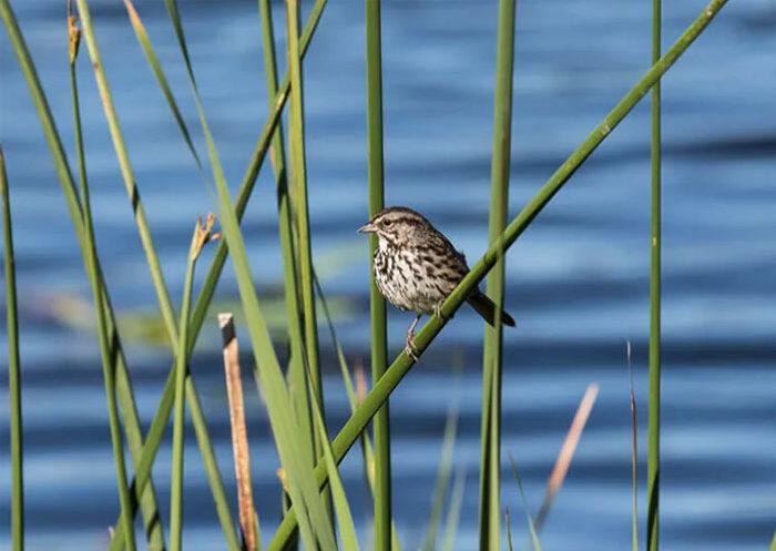 Bird Walk at Ellis Creek