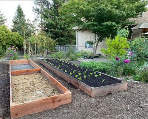 How to Grow Your Pandemic Victory Garden