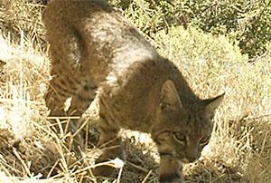 Wildlife Camera Trapping