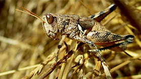 Insects class