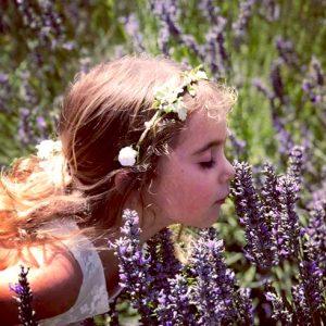 Lavender at Monte-Bellaria di California