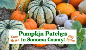 Pumpkin Patches in Sonoma County