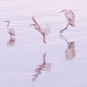 Birdwatching talk Laguna
