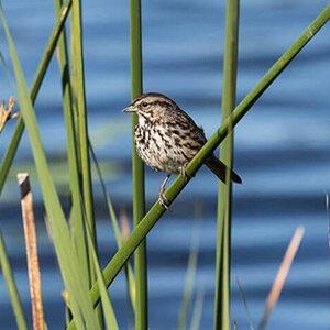 Guided Bird and Nature Walks in Petaluma