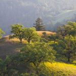 Pole Mountain hike by Sonoma Land Trust
