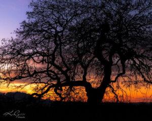 Sunset at Ellis Creek Wetlands, photo by Katie Gebhardt.