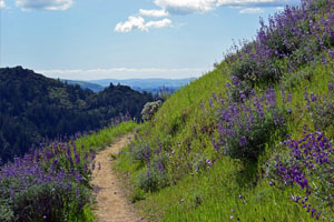 Where to Hike in Sonoma County