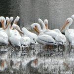 Birding Laguna