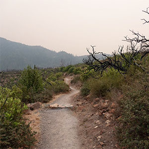 Sugarloaf fire recovery walk