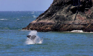 Whale watching, Stewards of the Coast and Redwoods