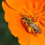 Bees N Blooms Farm Weekend