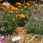 Eco Garden Tour