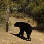 Sonoma Ecology Trivia
