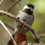 Bird listening workshop Laguna