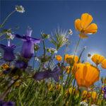 Wildflower Walks Sonoma County Regional Parks