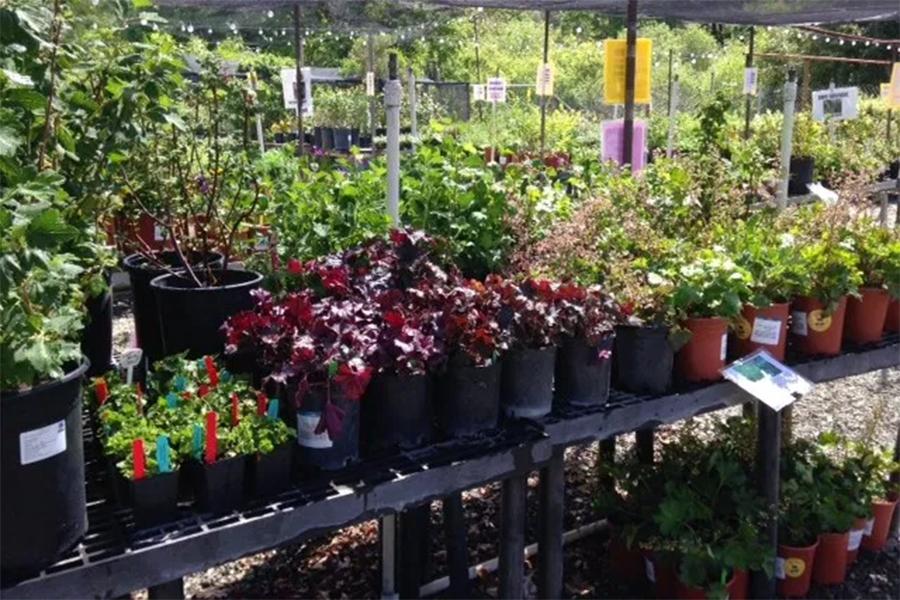 Plant sales Sonoma County