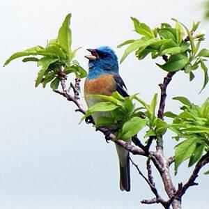 Bird at Laguna de Santa Rosa
