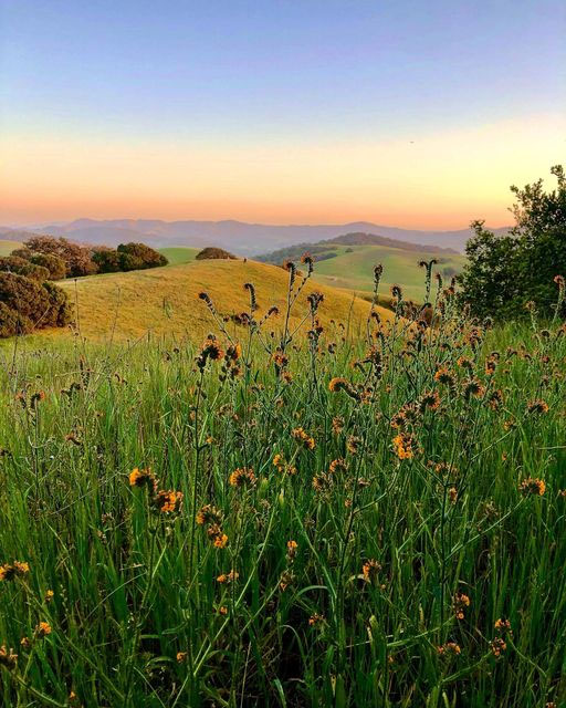 Jessica Williams - Sunset, hills, flowers in Putnam Park