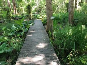 Hidden Forest Nursery in Sebastopol
