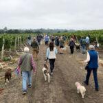 Baletto Vineyard Dog Walk