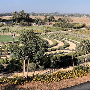 labyrinth at Bees and Blooms