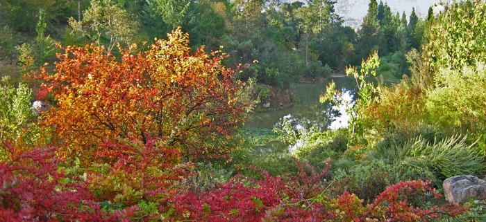 Maples at Sonoma Botanical Gardens