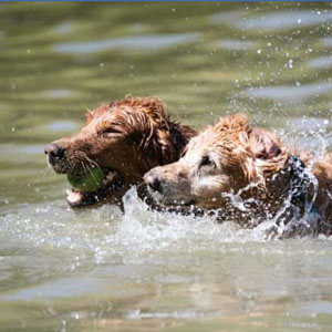 Water-Bark-S