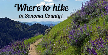Hiking in Sonoma County